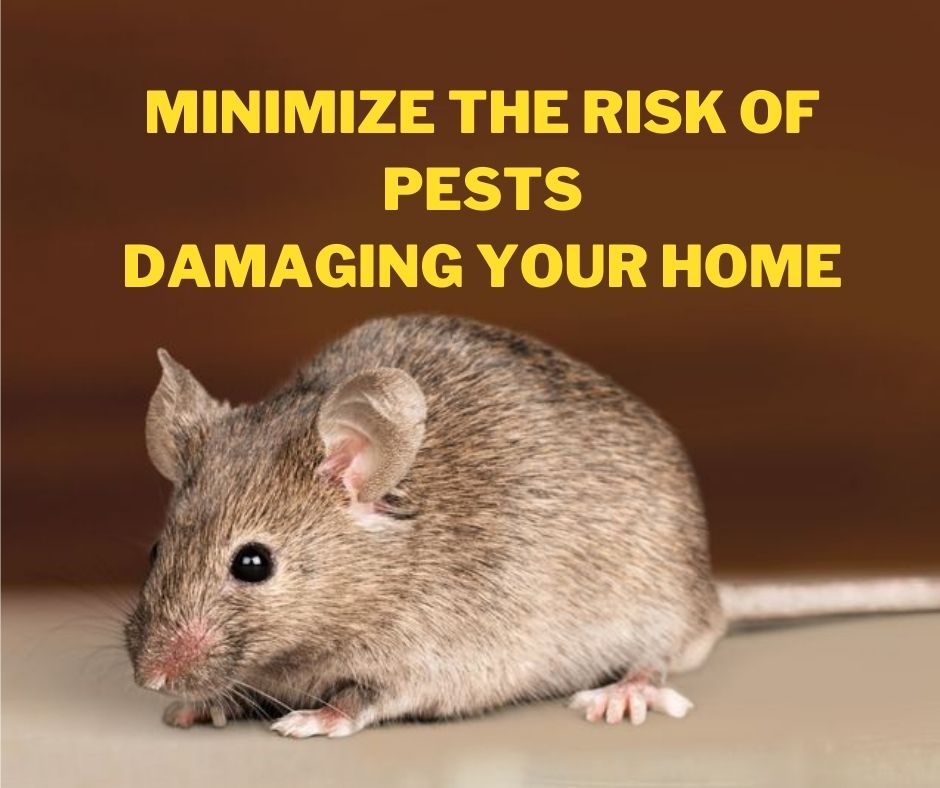 pests Minimize The Risk of Pests Damaging Your Home
