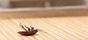bugs 300x138 bugs